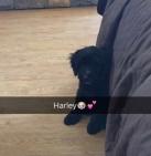 harley-1