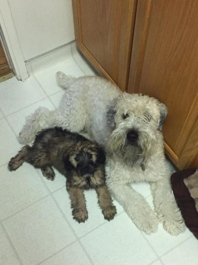 Lucky & Bailey