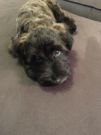Ollie2