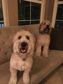 Kona & Nola